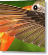 The Perfect Left Wing Of A Hummingbird Metal Print