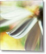 The Petal II Metal Print