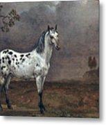 The Piebald Horse Metal Print