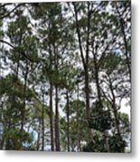The Pines Of Tallahassee Metal Print