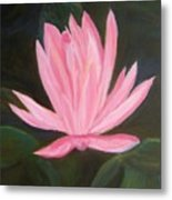 The Pink Water Lily Metal Print