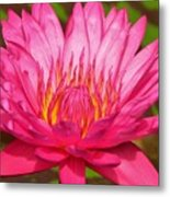 The Pinkest Of Pinks Metal Print by Lori Frisch