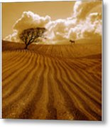 The Ploughed Field Metal Print by Mal Bray