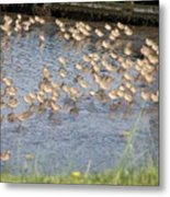 The Plovers Metal Print