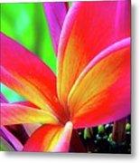 The Plumeria Flower Metal Print