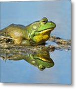 The Pond King Metal Print by Mircea Costina Photography