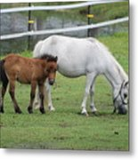 The Ponys Metal Print