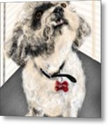 The Pooch With The Crooked Tooth Metal Print