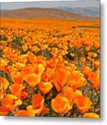 The Poppy Fields - Antelope Valley Metal Print