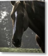 The Portrait Of The Horse Metal Print
