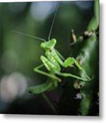 The Praying Mantis Metal Print