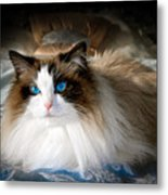 The Blue Eyed Princess  Metal Print