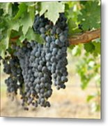 The Promise Of New Wine Metal Print