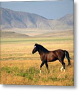The Proud One Metal Print