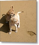 The Puppies Metal Print