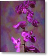 The Purple Orchid Metal Print