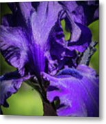 The Purple Show Metal Print