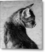 The Purrfect Glance Back Metal Print