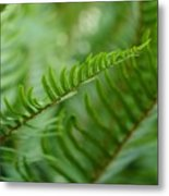 The Quiet Beauty Of Ferns Metal Print