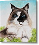 The Ragdoll Metal Print