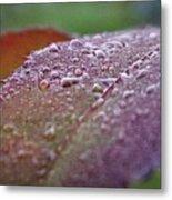 Rain Falls Lightly Metal Print