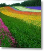 The Rainbow Of Flower At Hokkaido Metal Print