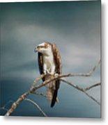 The Raptor - Osprey Metal Print