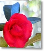 The Red Camellia Metal Print