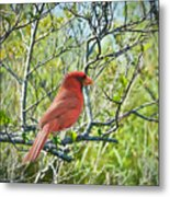 The Red Cardinal Metal Print