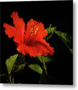 The Red Hibiscus Metal Print