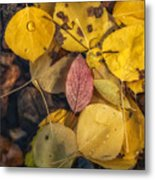The Red Leaf Metal Print