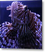 The Red Lionfish Metal Print