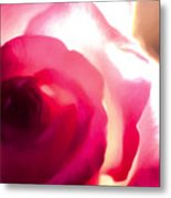 The Red Rose Metal Print