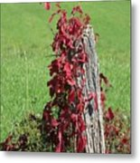 The Red Vine - Photograph Metal Print