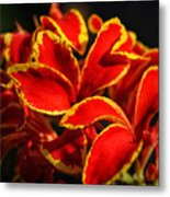 The Reds Of Winter Metal Print