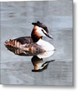 The Reflection Of A Grebe Metal Print