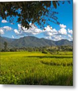 The Rice Fields Of Pai, Thailnad Metal Print