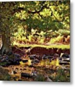 The River Lin , Bradgate Park Metal Print