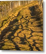 The Road To The Pasture Metal Print