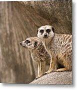 The Rock Of Meerkats Metal Print