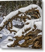 The Roots Of Winter Metal Print