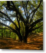 The Sacred Oak Metal Print