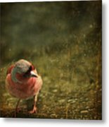 The Sad Chaffinch Metal Print