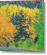 The Sanctity Of Nature Reified Through A Photographic Image  Metal Print