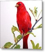 The Scarlett Tanager  Metal Print