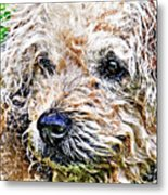 The Scruffiest Dog In The World Metal Print