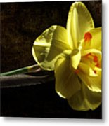 The Secrets Within Metal Print