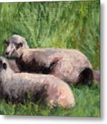The Sheep Are Resting Metal Print