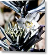 The Shy Desert Lily Metal Print