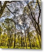 The Silent Forest  Metal Print